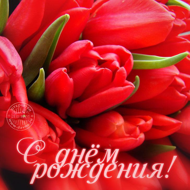 Открытки с днем рождения женщине красивые цветы тюльпаны (15)