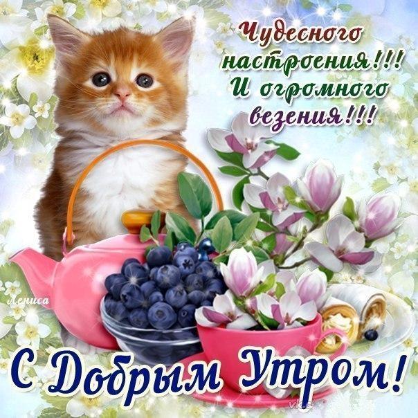 Пожелания с добрым утром друзьям прикольные в картинках (1)