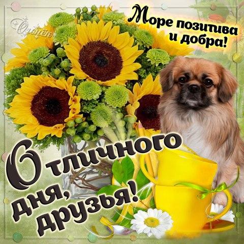 Пожелания с добрым утром друзьям прикольные в картинках (2)