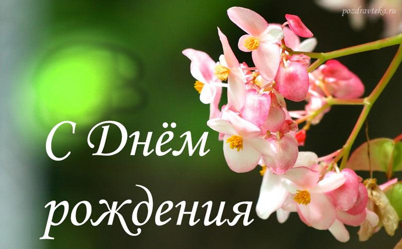 Цветы-копировать, картинки с днем рождения с орхидеями пожелания