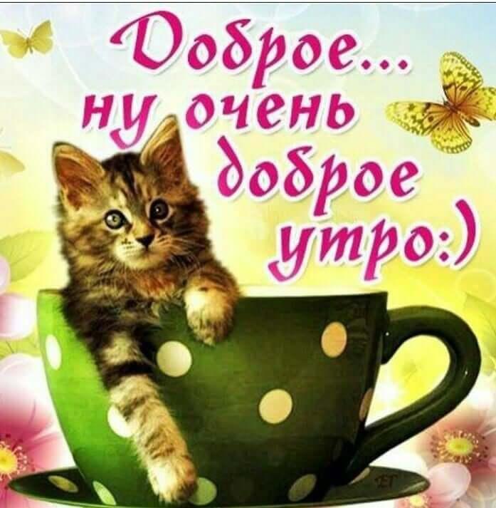 Позитивные картинки для поднятия настроения с добрым утром (2)