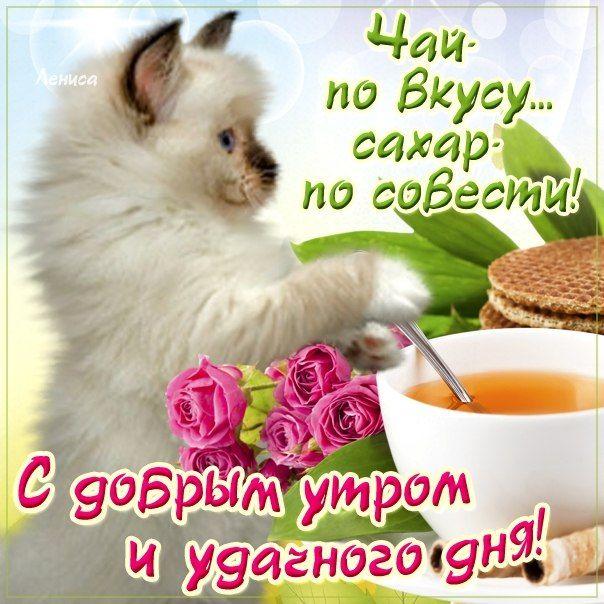 Позитивные картинки с добрым утром для поднятия настроения (2)