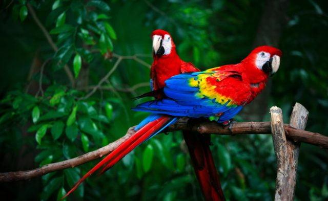 Прикольные и красивые картинки попугая - подборка (1)