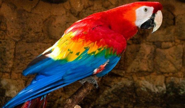 Прикольные и красивые картинки попугая - подборка (10)