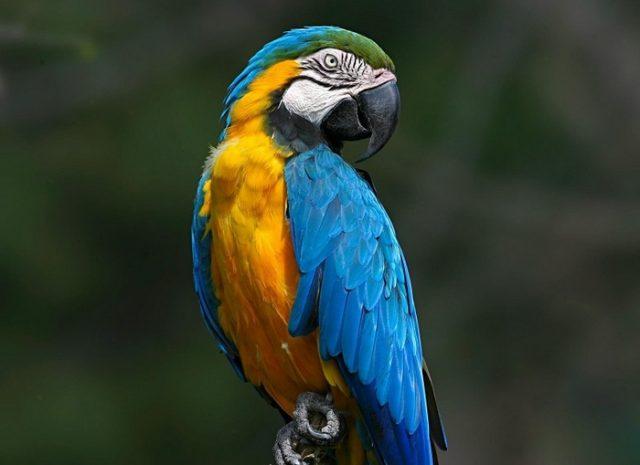 Прикольные и красивые картинки попугая - подборка (11)
