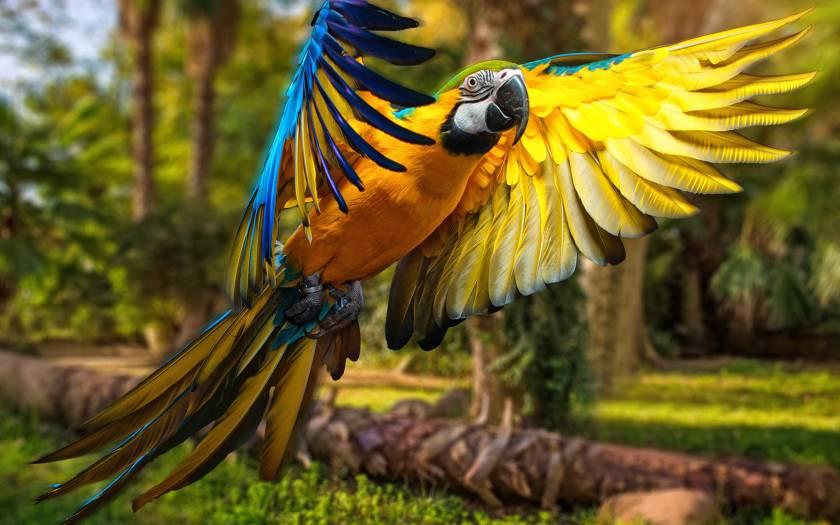Прикольные и красивые картинки попугая - подборка (12)