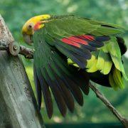Прикольные и красивые картинки попугая   подборка (13)