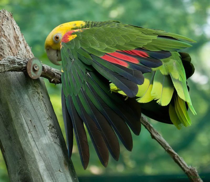 Прикольные и красивые картинки попугая - подборка (13)