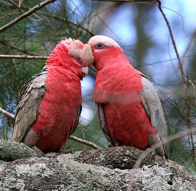Прикольные и красивые картинки попугая - подборка (14)