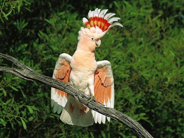 Прикольные и красивые картинки попугая - подборка (15)