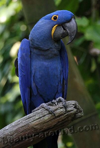 Прикольные и красивые картинки попугая - подборка (16)