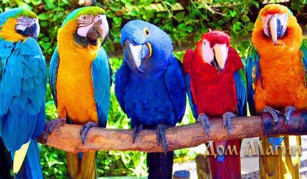 Прикольные и красивые картинки попугая - подборка (18)