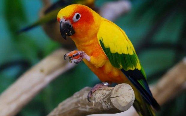Прикольные и красивые картинки попугая - подборка (2)