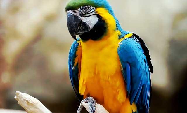 Прикольные и красивые картинки попугая - подборка (20)