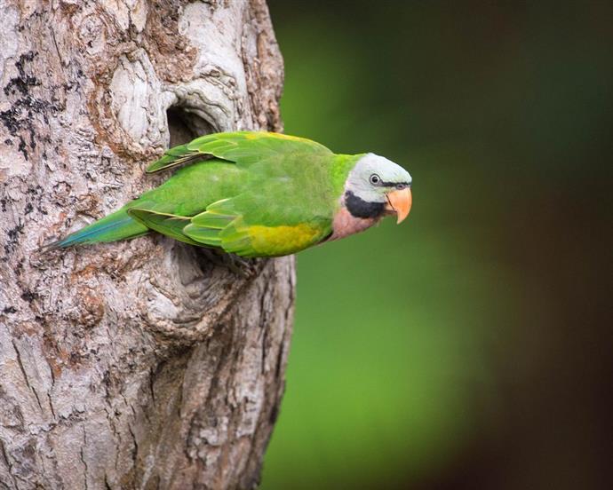Прикольные и красивые картинки попугая - подборка (21)