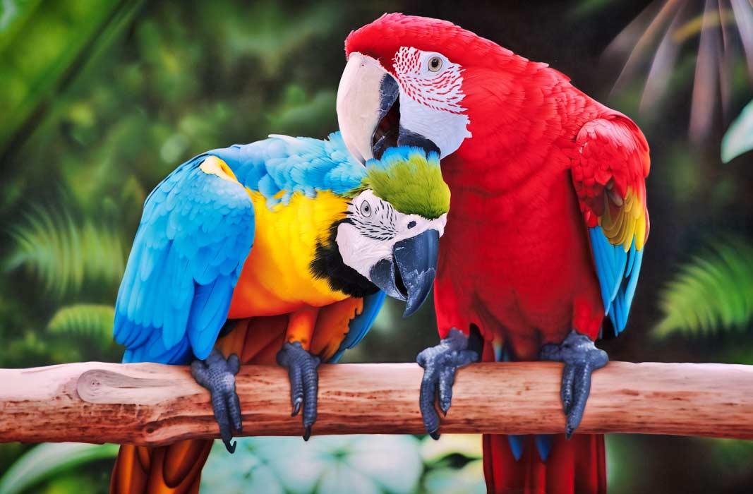 Прикольные и красивые картинки попугая   подборка (3)