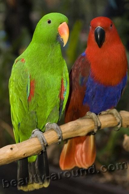 Прикольные и красивые картинки попугая - подборка (4)