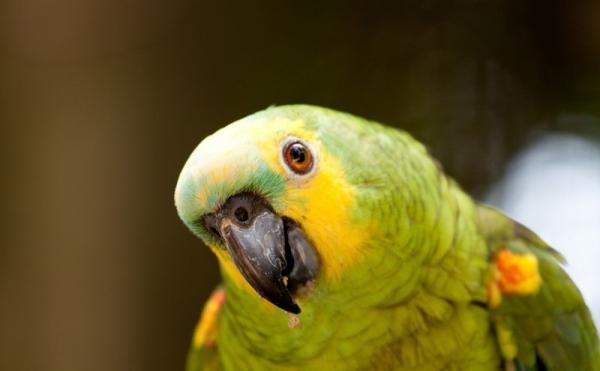 Прикольные и красивые картинки попугая - подборка (5)