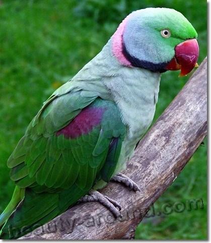 Прикольные и красивые картинки попугая - подборка (6)