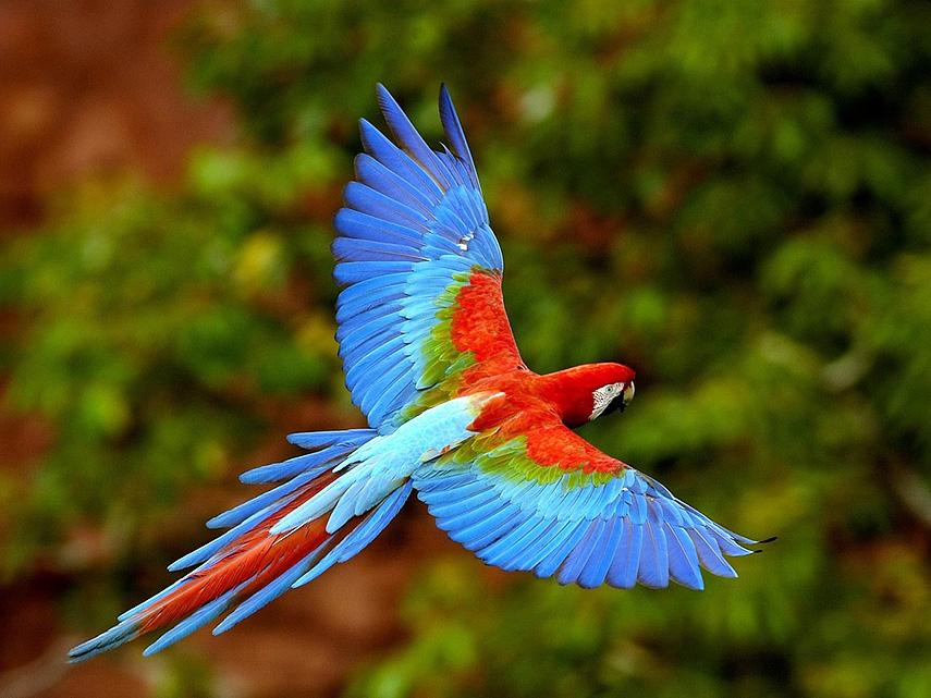 Прикольные и красивые картинки попугая - подборка (7)