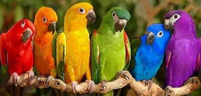 Прикольные и красивые картинки попугая - подборка (8)