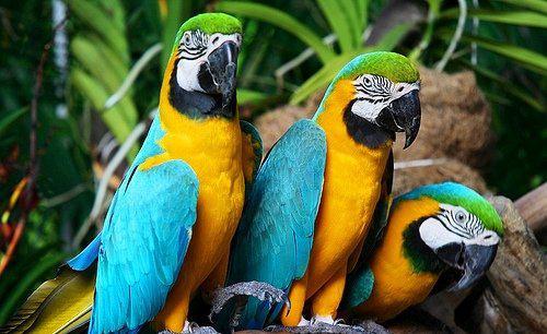 Прикольные и красивые картинки попугая - подборка (9)
