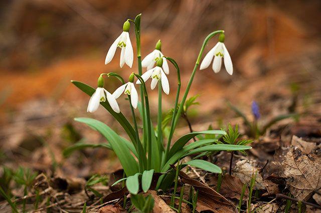 Прикольные и красивые картинки про Апрель (15)
