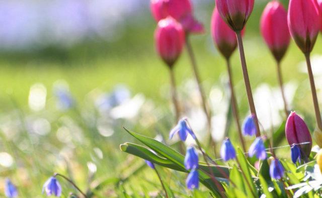 Прикольные и красивые картинки про Апрель (17)
