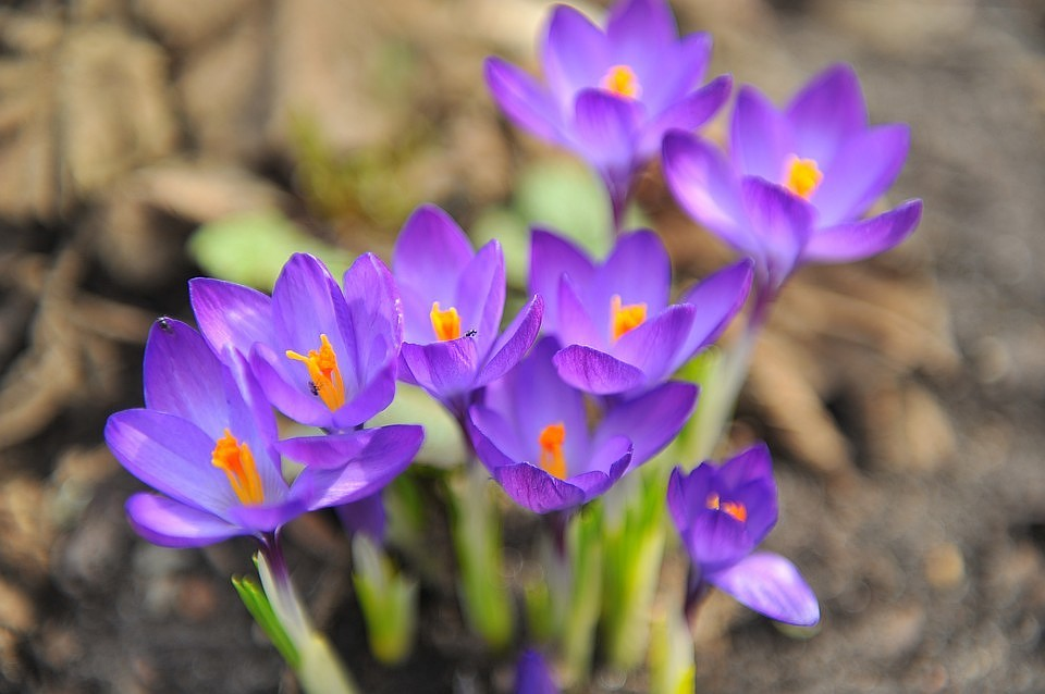 Прикольные и красивые картинки про Апрель (3)
