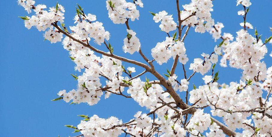 Прикольные и красивые картинки про Апрель (5)