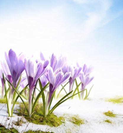 Прикольные и красивые картинки про Март (20)
