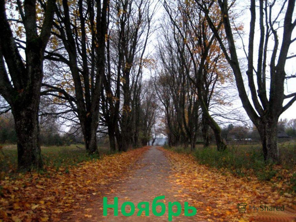 Прикольные и красивые картинки про Ноябрь (1)