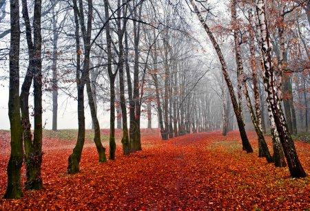 Прикольные и красивые картинки про Ноябрь (13)
