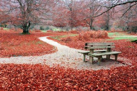 Прикольные и красивые картинки про Ноябрь (14)