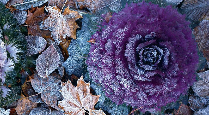 Прикольные и красивые картинки про Ноябрь (17)