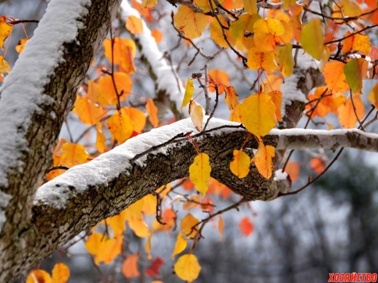 Прикольные и красивые картинки про Ноябрь (4)