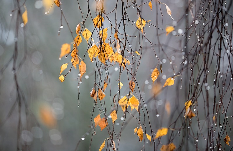 Прикольные и красивые картинки про Ноябрь (5)