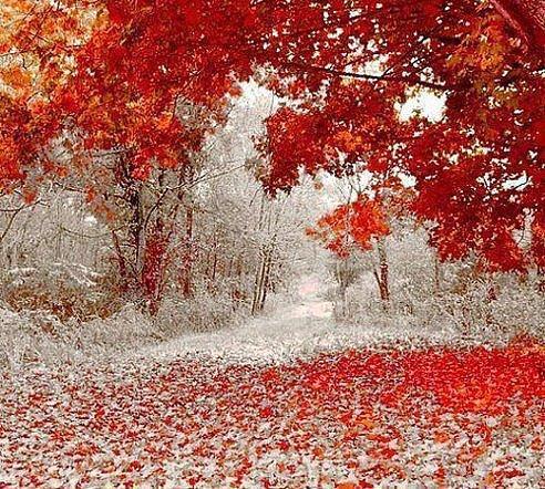 Прикольные и красивые картинки про Ноябрь (7)