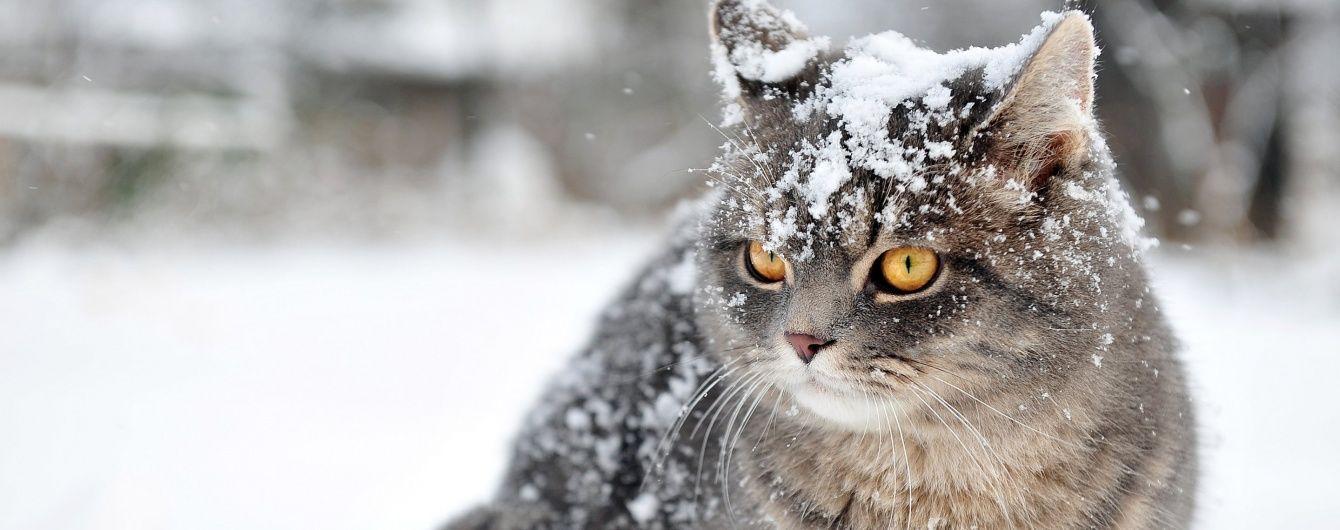 Прикольные картинки про зиму для взрослых и детей (28)