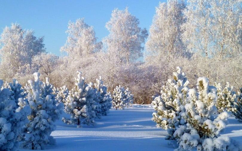 Прикольные картинки про зиму для взрослых и детей (7)