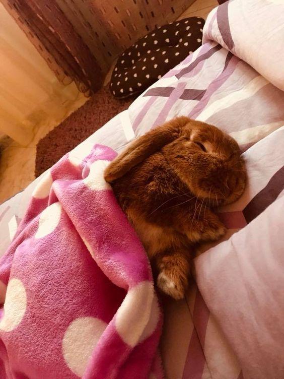 Пушистые зайцы фото и картинки (1)