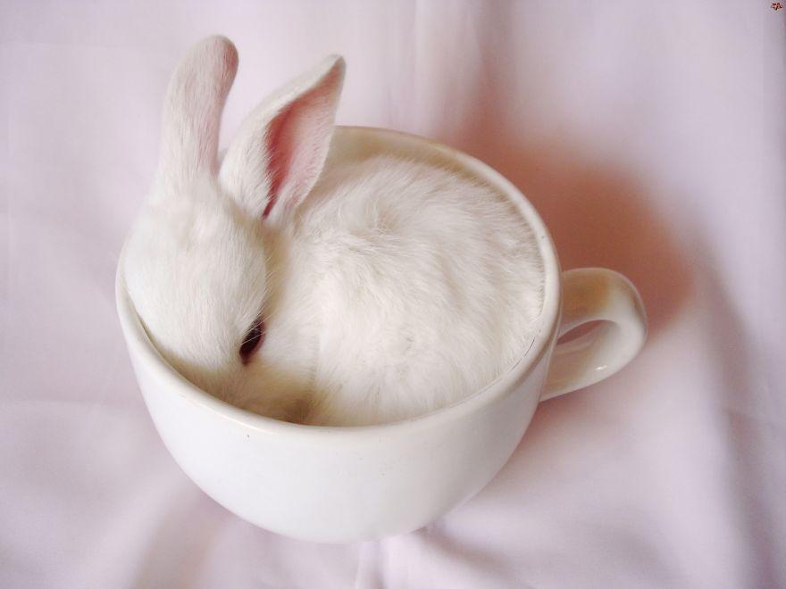 поиска картинки чашки и кролика позже, когда