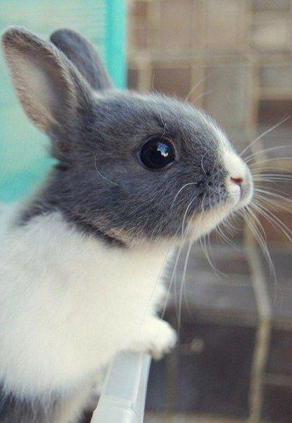 Пушистые зайцы фото и картинки (12)