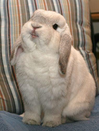 Пушистые зайцы фото и картинки (13)
