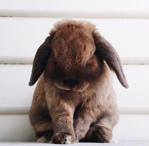 Пушистые зайцы фото и картинки (14)