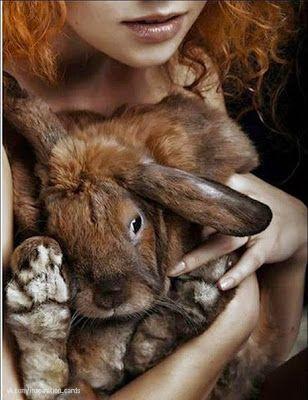 Пушистые зайцы фото и картинки (16)