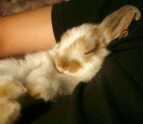 Пушистые зайцы фото и картинки (17)