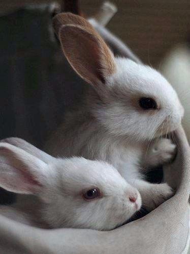 Пушистые зайцы фото и картинки (18)