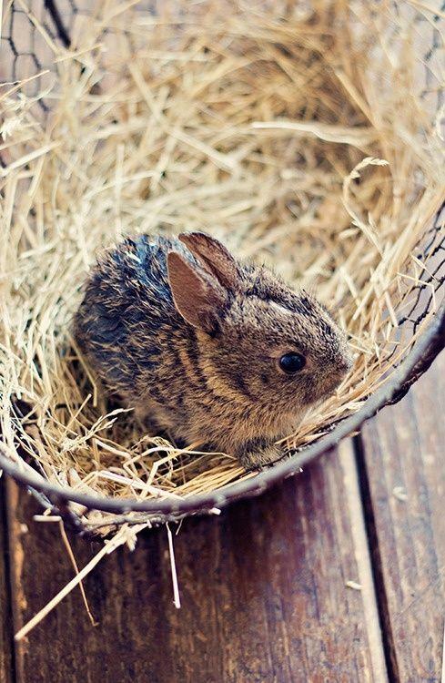 Пушистые зайцы фото и картинки (19)