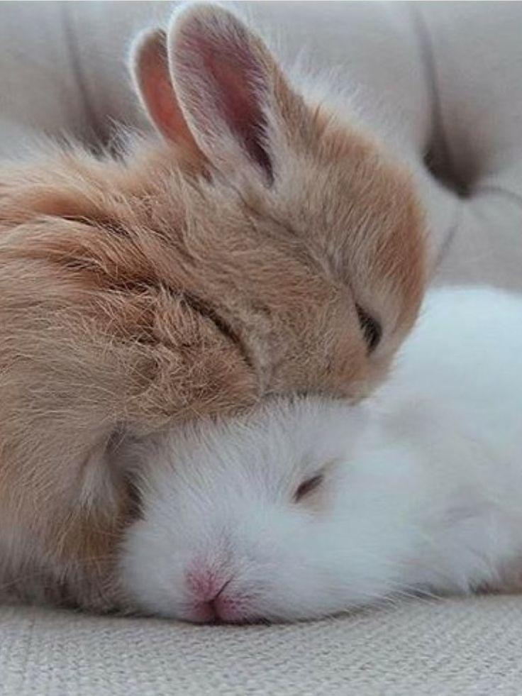Пушистые зайцы фото и картинки (20)